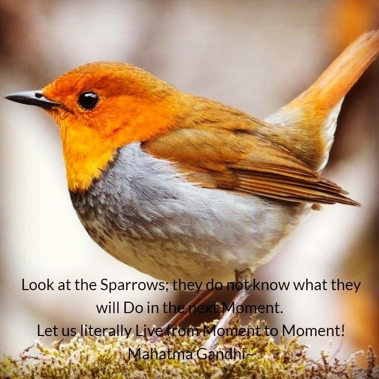 Sparrows; Moment. literally Liv - dare2bare | ello