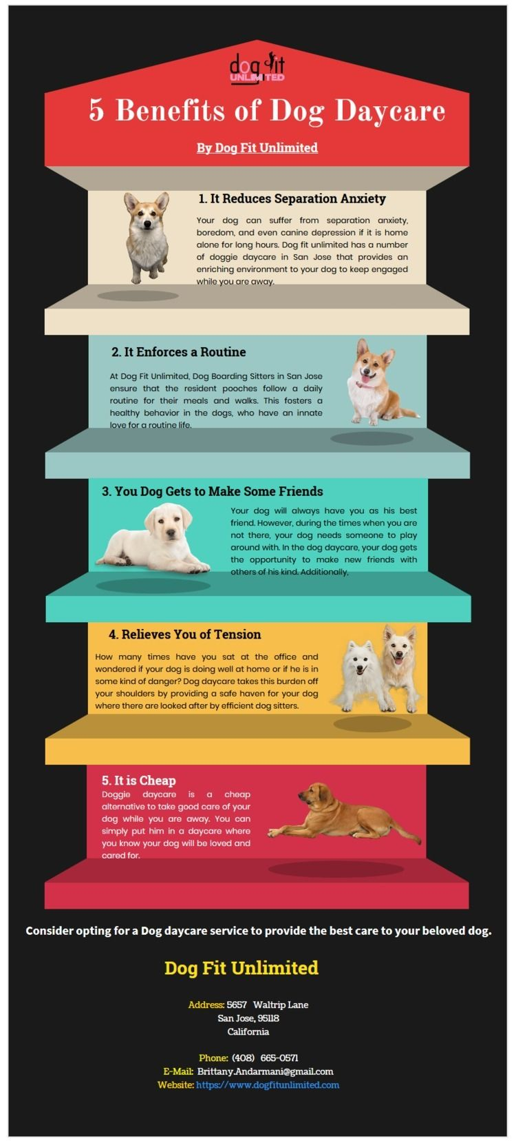 5 Major Benefits Dog Daycare Sa - dogfitunlimited | ello