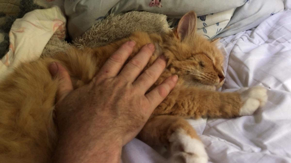 sight hand petting - fivecats | ello