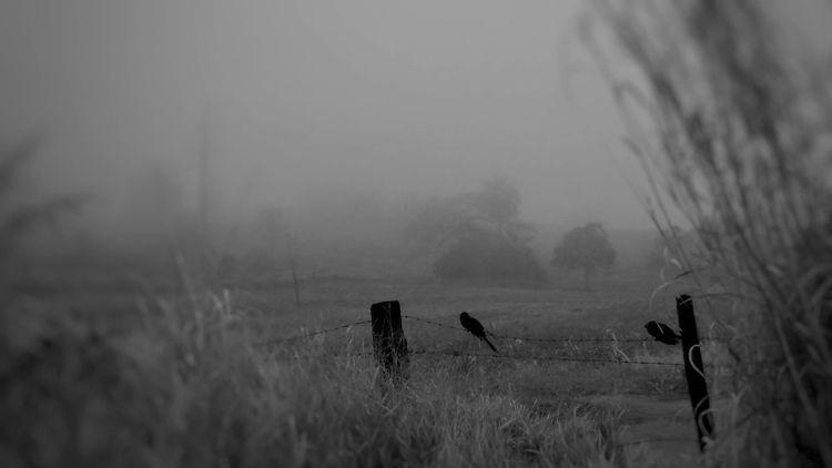 BIRDS - birds, countryside, bw - duenhas | ello