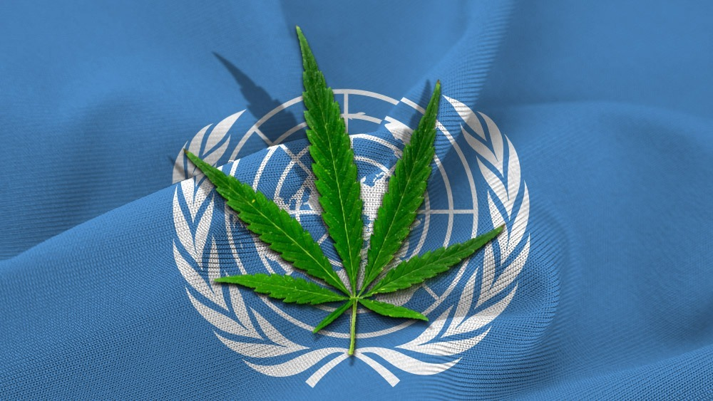 World Health Organization Recom - ellocannabis | ello
