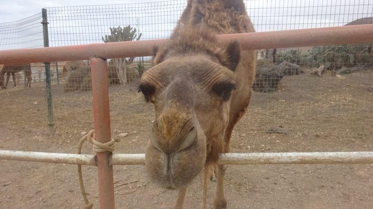 camel - BLACKISLAND, coolife, HAPPYPLANET - chistinewilmes | ello