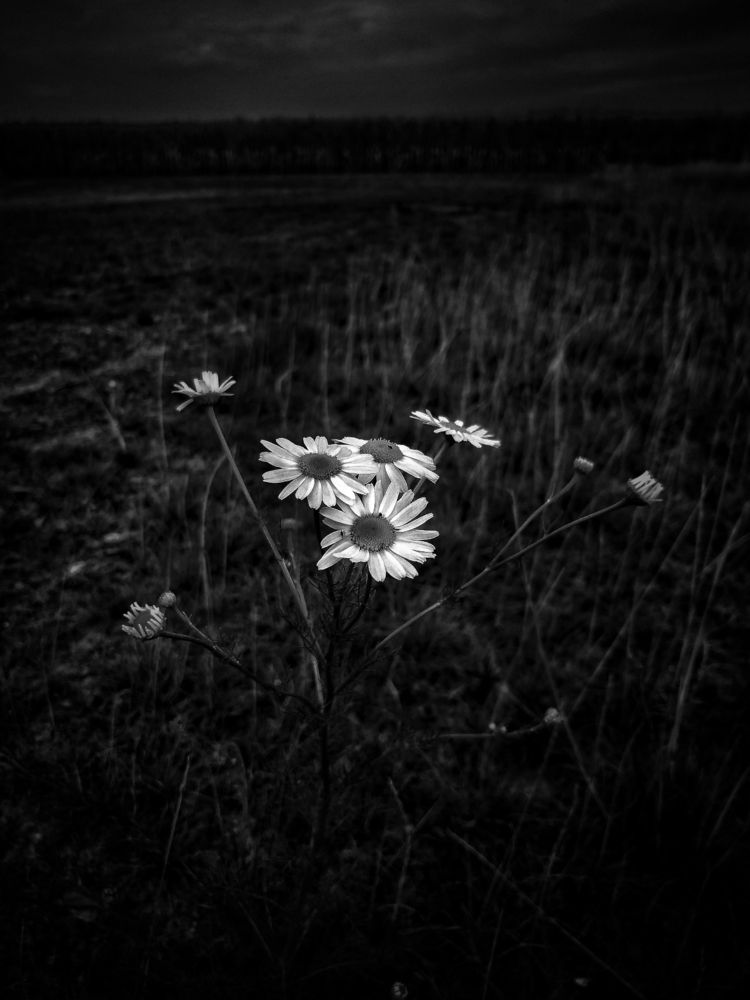 soulful_moments, flower, blossom - gladbach4ever | ello