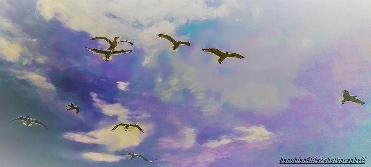 soar birds banubian4LIFE photog - banubianlife | ello