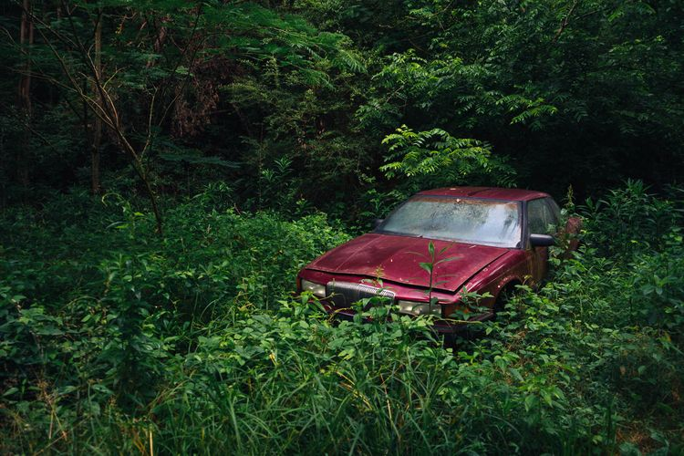 Lost Woods abandoned car decays - mattgharvey | ello