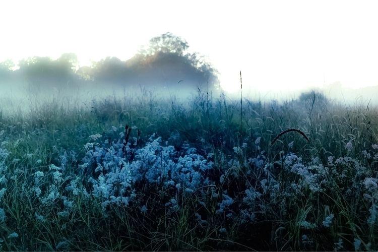winter, fog, morningcalm, bliss - laylanicholson | ello