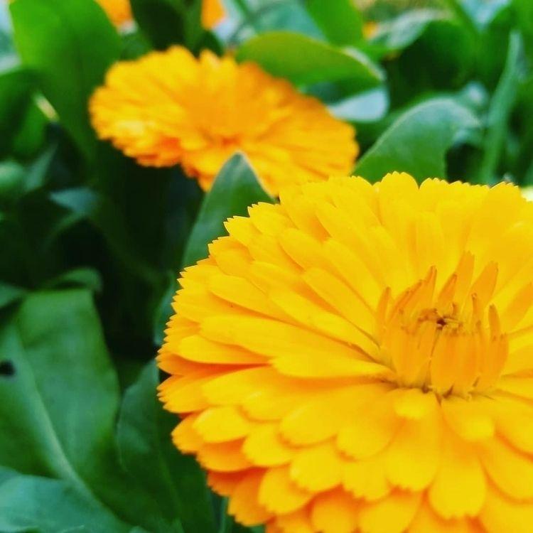 flowers, Brazil, Floresta, trip - mateussantos1996 | ello