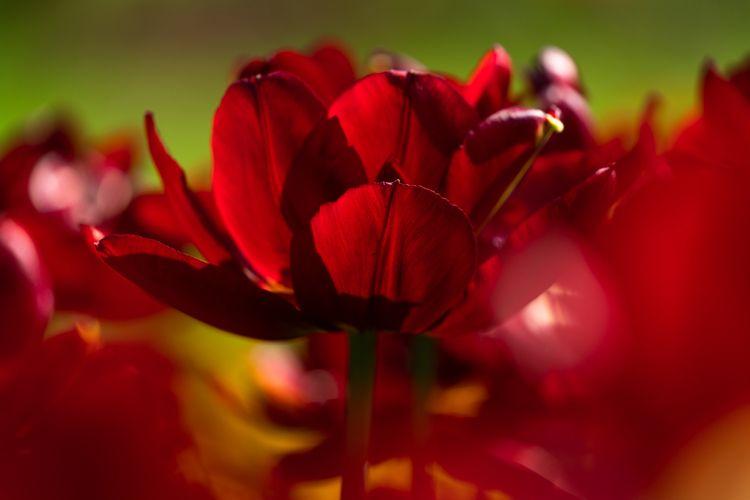 bright red colors post ello - fotoblubb | ello