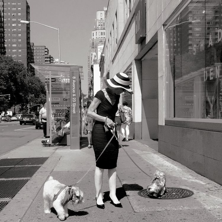 Dogs - nycpointandshoot | ello