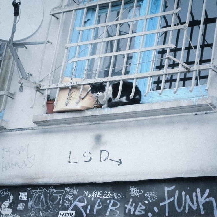 streets, 2016 - 35mm, filmphotography - ozlemoktay | ello