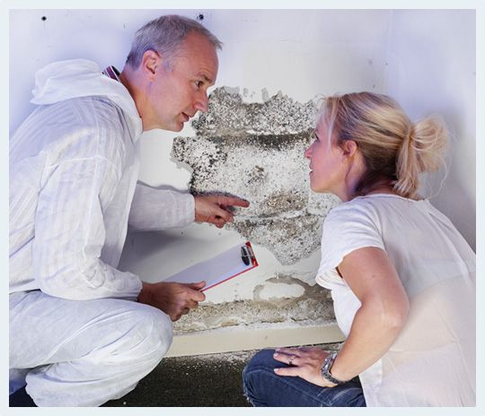 sydney building reports Rapid B - rapidbuildingsydney | ello