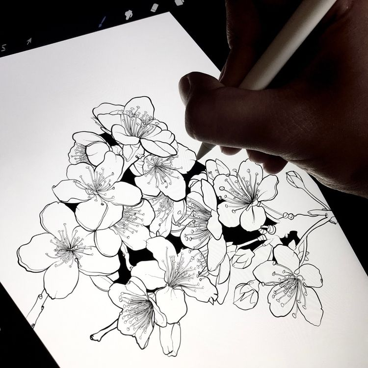 Cherry Blossoms progress  - illustration - freshmilkart | ello