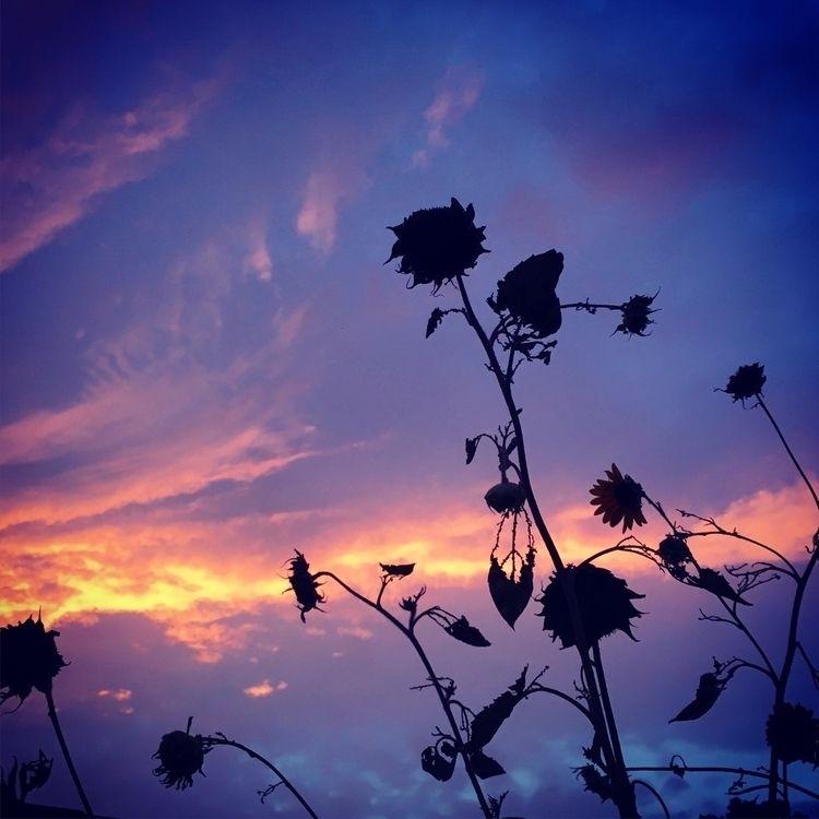Smoke, sunset, sunflowers - redbrush77 | ello