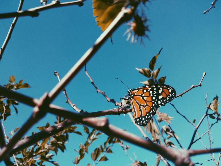 nature, butterfly, art - lucianacarvl | ello