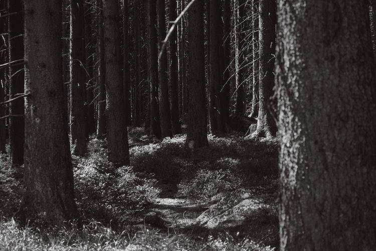 hiking, blackandwhite, bnwtravelphotography - mjut | ello