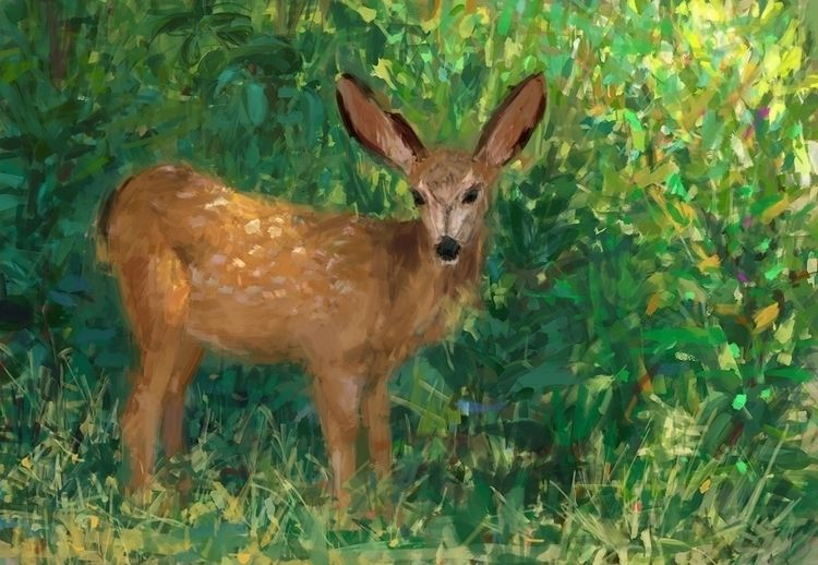 Curious deer Sketch, photo stud - mujkicharis | ello