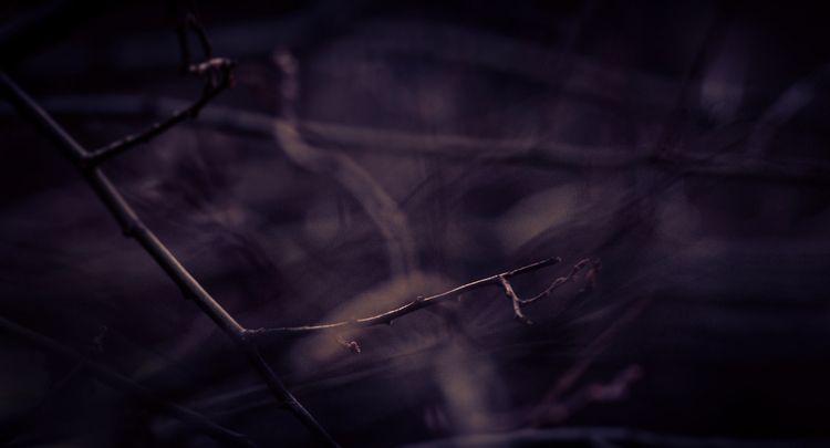Naked seasonal Tree branches le - panioan | ello