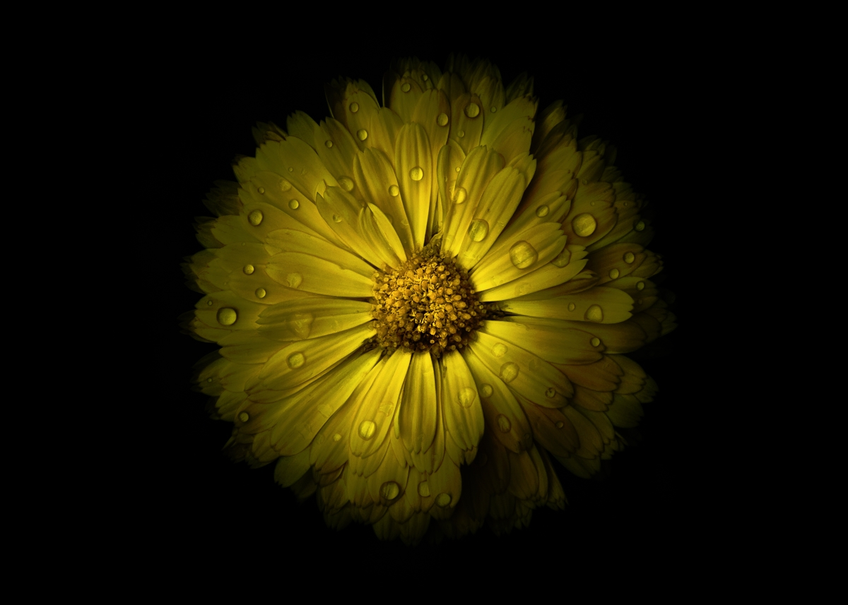 Backyard Flowers 10 Color Versi - thelearningcurvephotography | ello