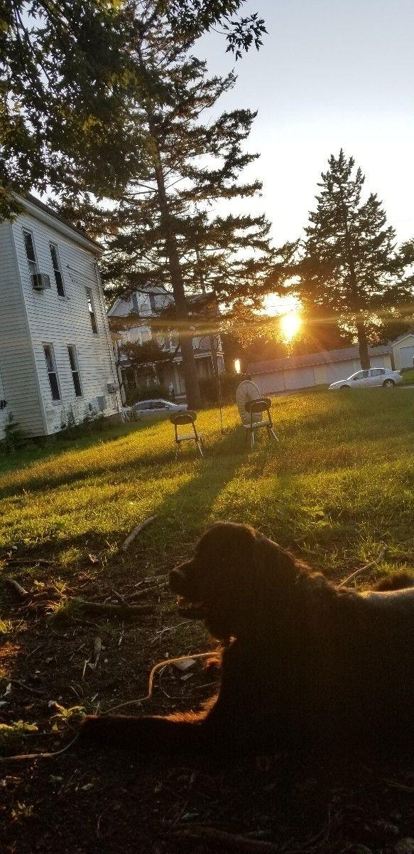 glorious sunset BFF - Ilovemydog - herm1t | ello