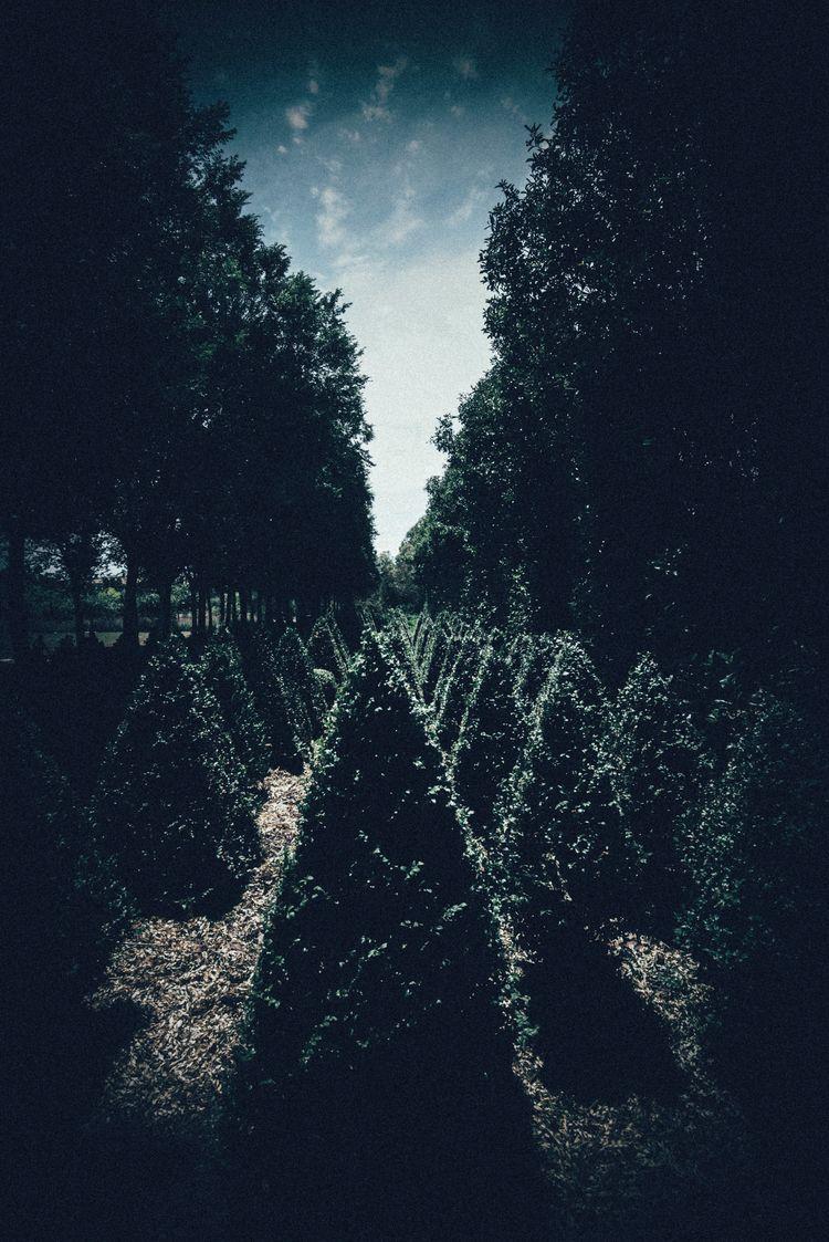 Wonderland - miyuki_mardon | ello