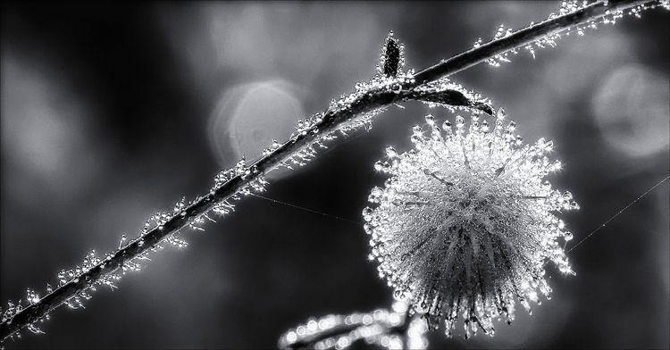 morning dew  - monochrome, blackandwhite - docdenny | ello