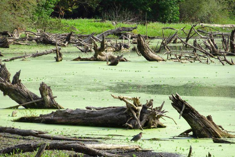 Teichert Pond...9.2018...#natur - zygzwurx   ello