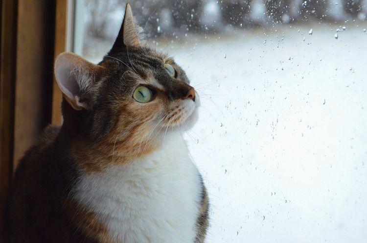 Cats hiding rain - long water s - gebeleizis | ello