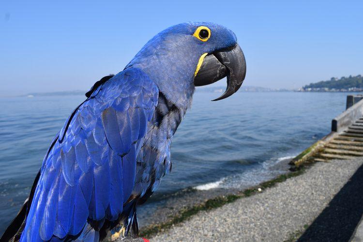 Portrait Parrot, Part Deux. Hya - michaelostrogorsky   ello