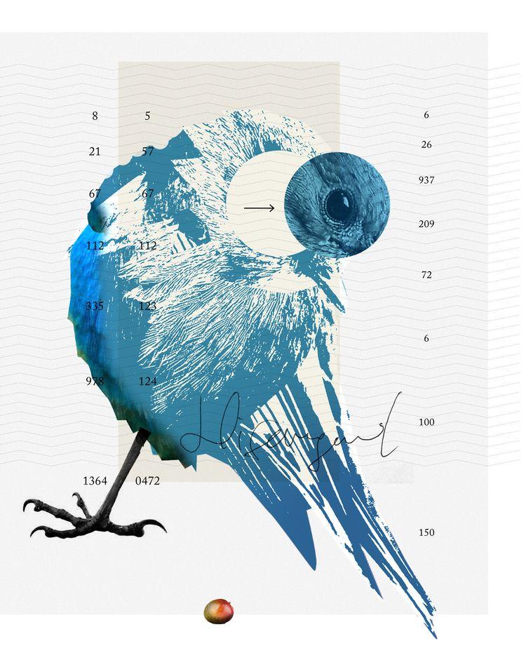 Futile resistance Bird - art, graphic - markograf | ello