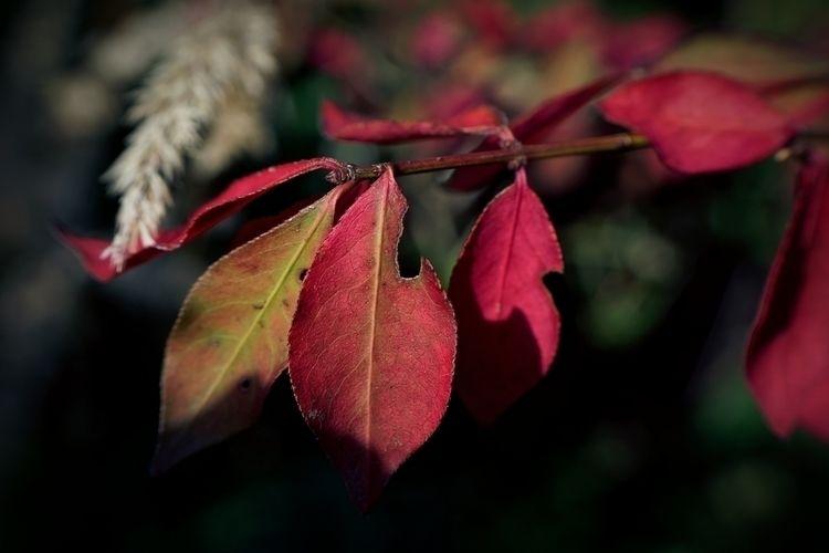 Flags fall - photography, foliage - marcushammerschmitt   ello