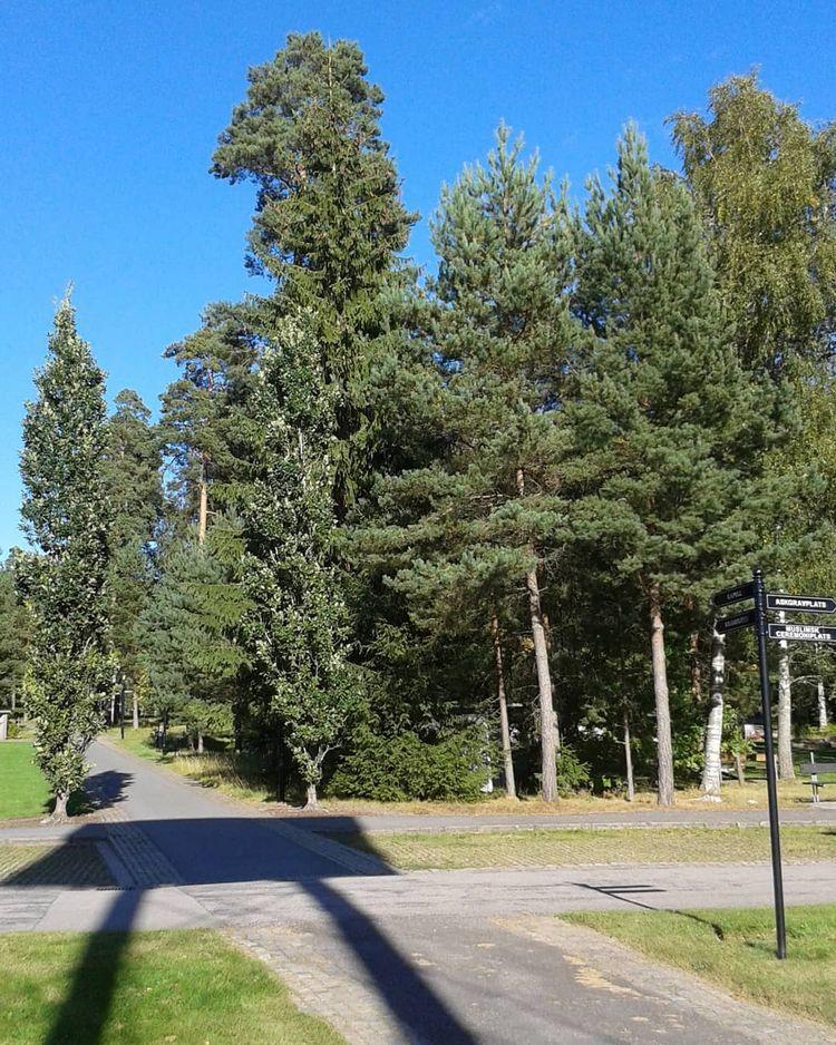 Vägen mot kapellet från Klockst - skogskyrkogardar | ello
