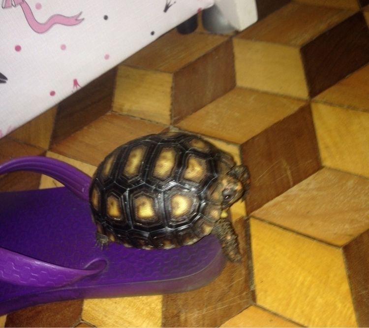 Eu tenho uma tartaruga ela é fo - moonbyule | ello