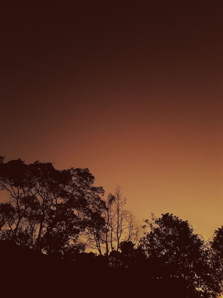 sunset, sunshine, ellolandscape - felipehelfstein | ello