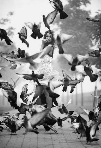 birds meant caged, feathers bri - lolosbri | ello