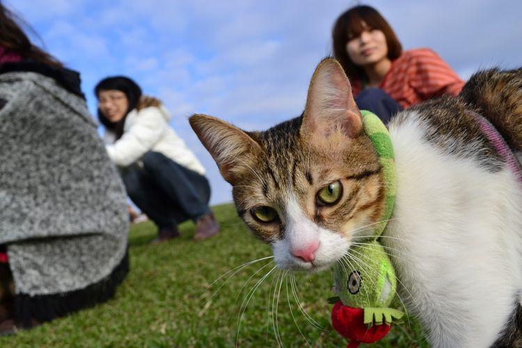 taiwan, cat, animal - marmeid | ello