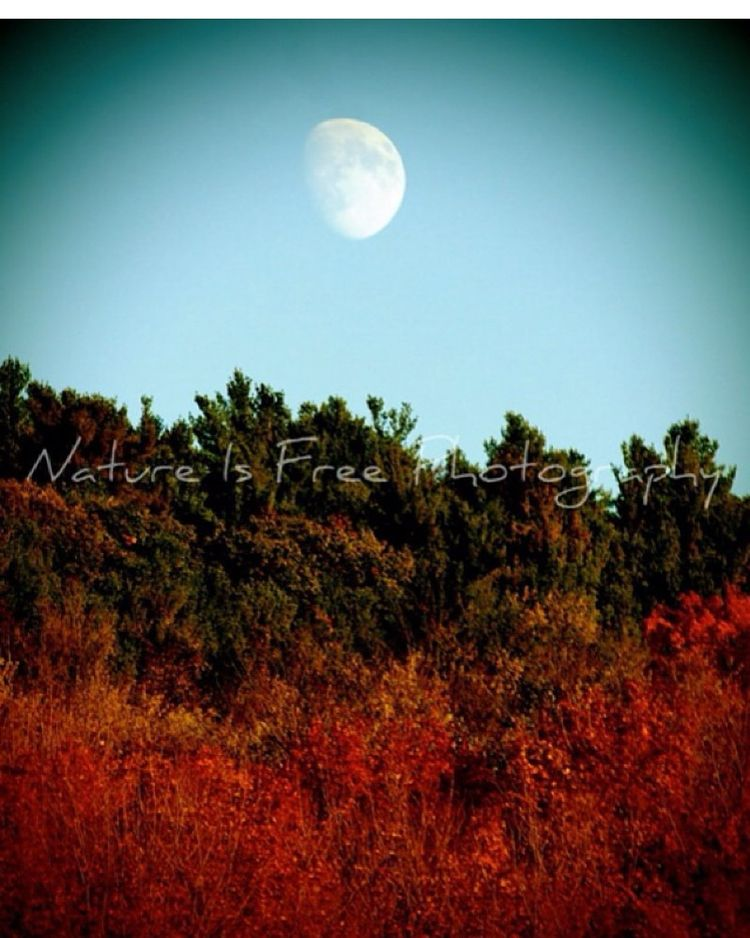 Happy Harvest Moon bit closer - moon - natureisfree | ello