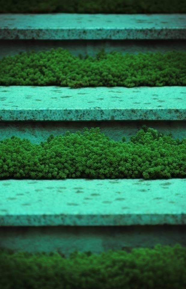 green iz - photography, stairs, summer#colorphotography - roni-veronica | ello