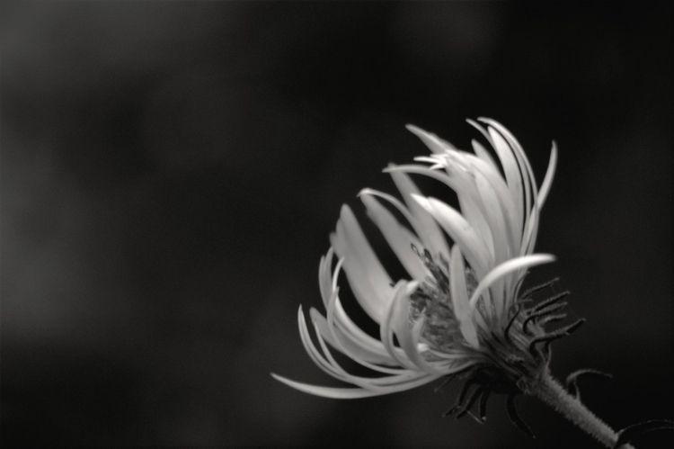 beauty weeds white photography  - michaeljohnsworld | ello