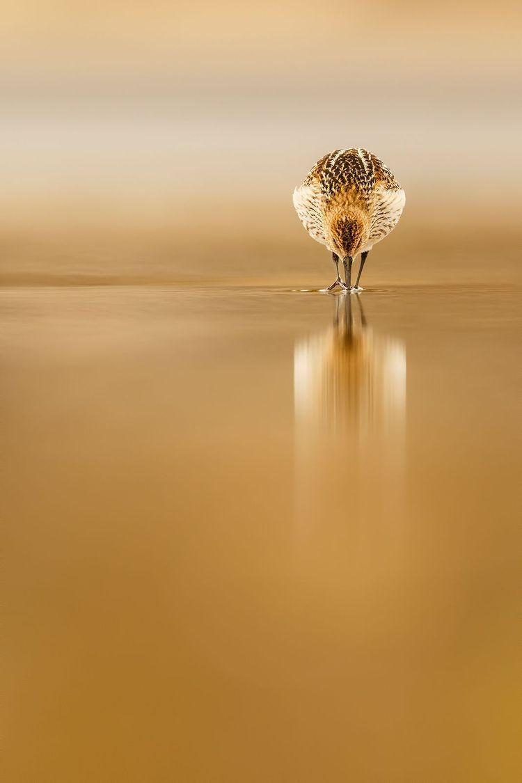 Top Shot: Dunlin Reflections Sh - jenova12345 | ello
