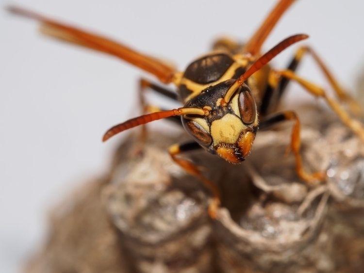 Guarding Nest || Camera: OMD EM - patdurr | ello
