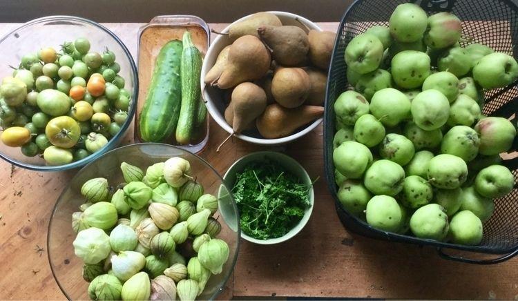 complaining day harvest season  - laurabalducci | ello