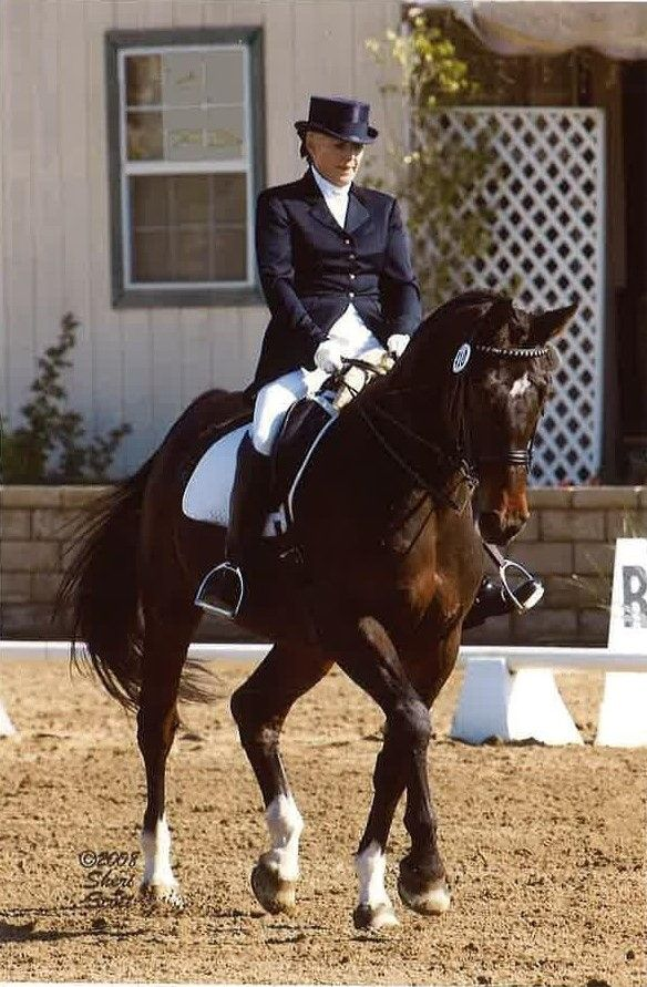 Shelley Browning great career e - shelleybrowningdressage | ello