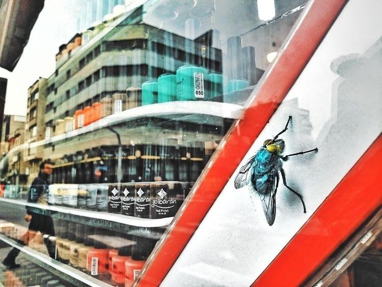 urban ecosystem - experia_Z2 - molek | ello