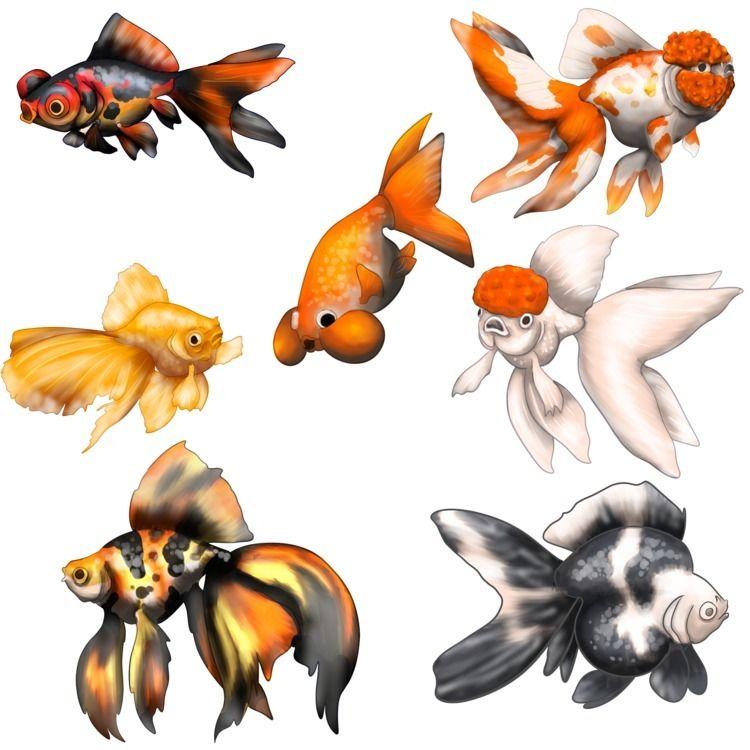 Fancy goldfish - studiocorvid | ello