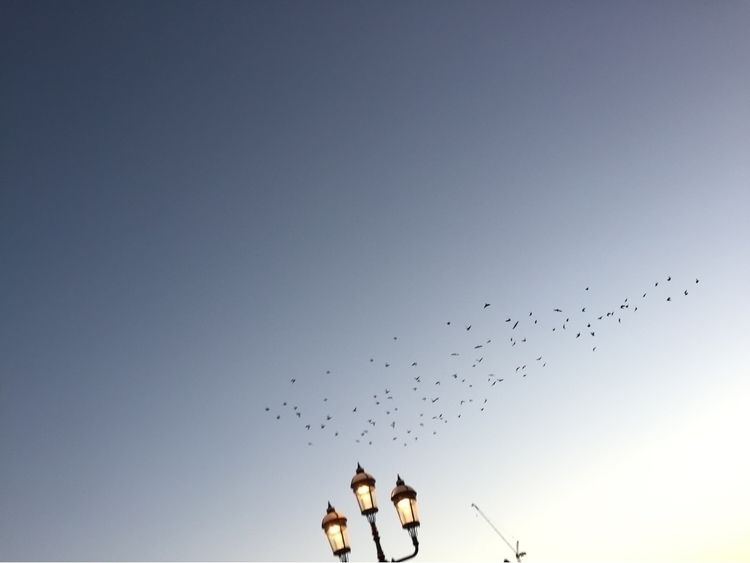 Birds - ellophotography, sky, birds - blackflowerchild   ello