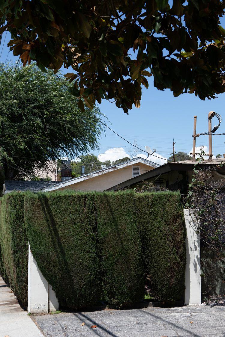 House, Foliage, West Silver Lak - odouglas | ello