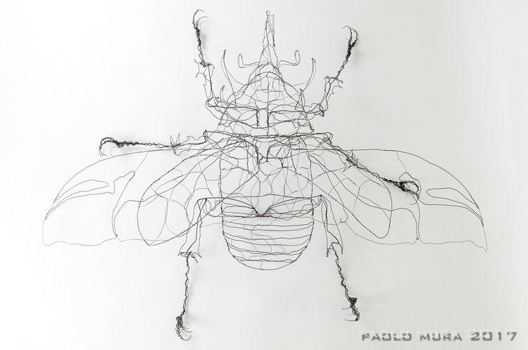 Eupatorus gracilicornis (cm.135 - fildiferro | ello
