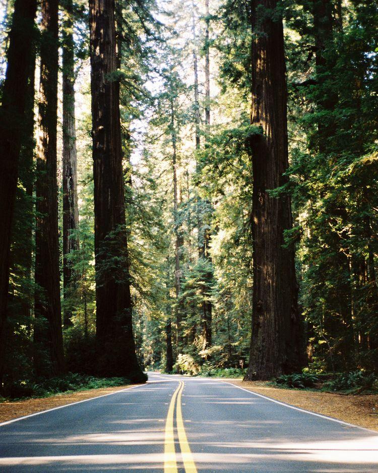 Enter Redwoods, Matt Steindl - fieldmag   ello