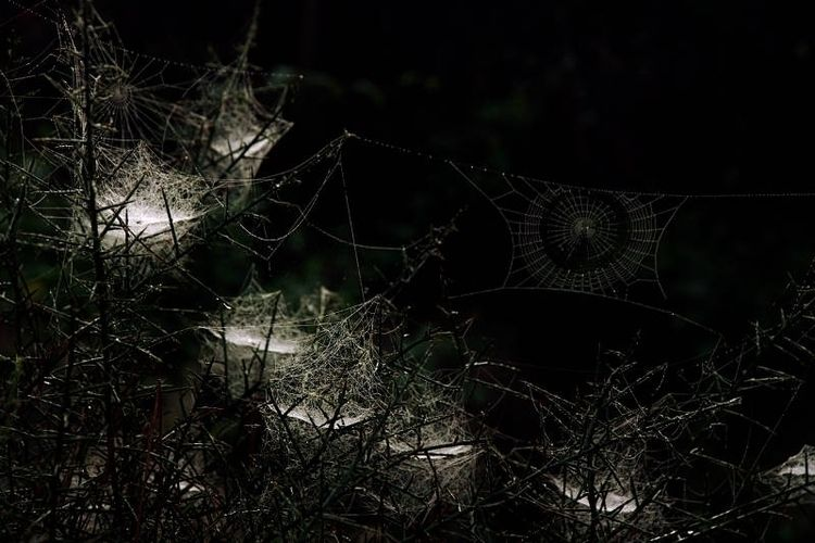 Spiders' webs - photography, colourphotography - andrewld | ello
