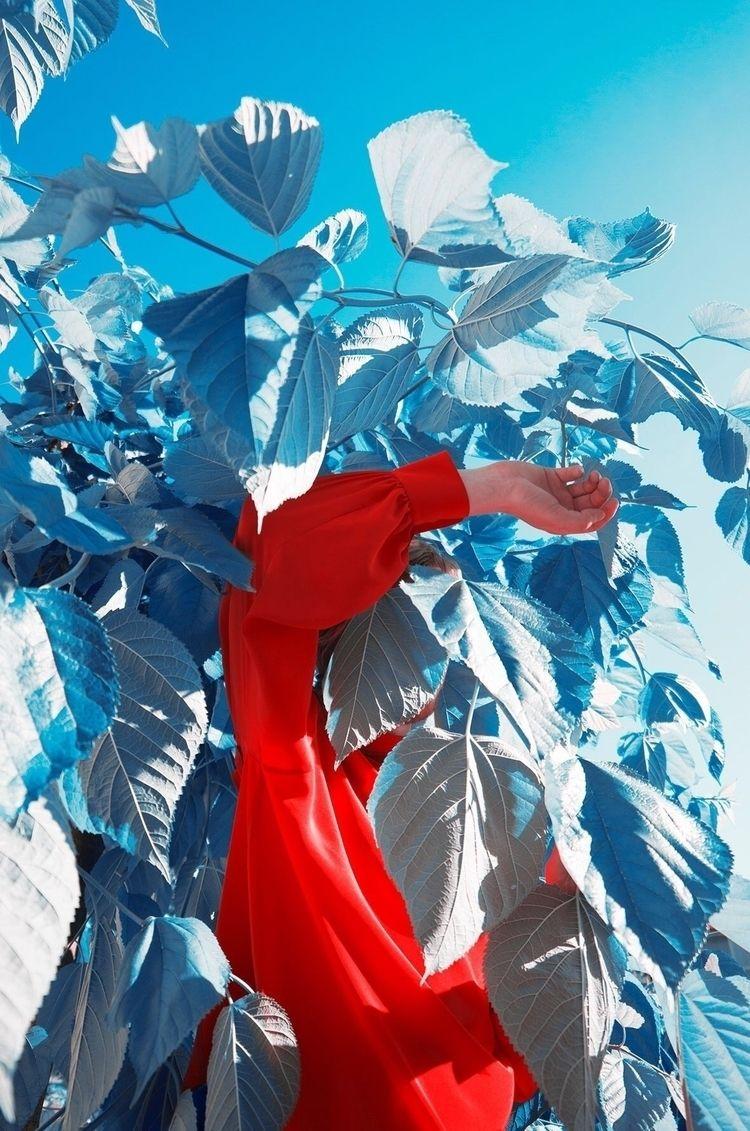 Herbe Bleu // Anne Laure Etienn - hashtagphotographymagazine | ello